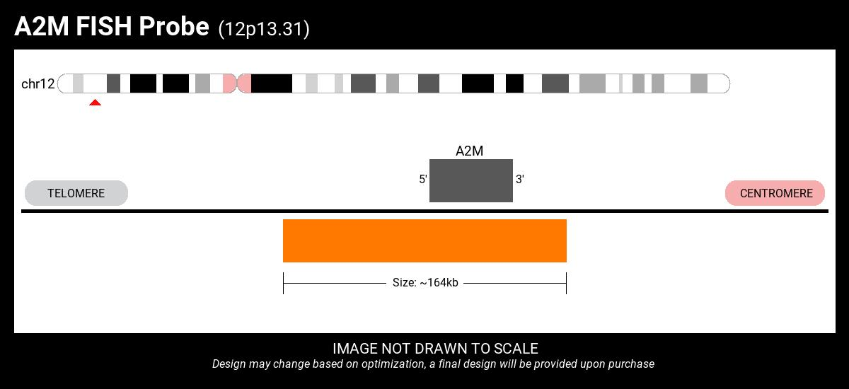 A2M-CCT5 Fusion FISH Probe