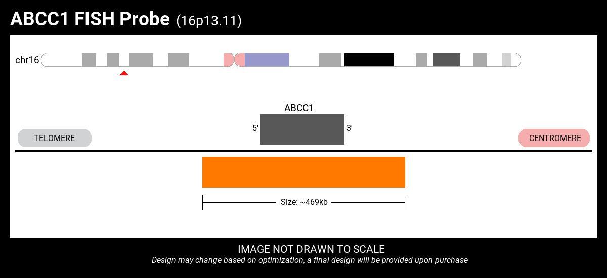 ABCC1-PRKCB Fusion FISH Probe