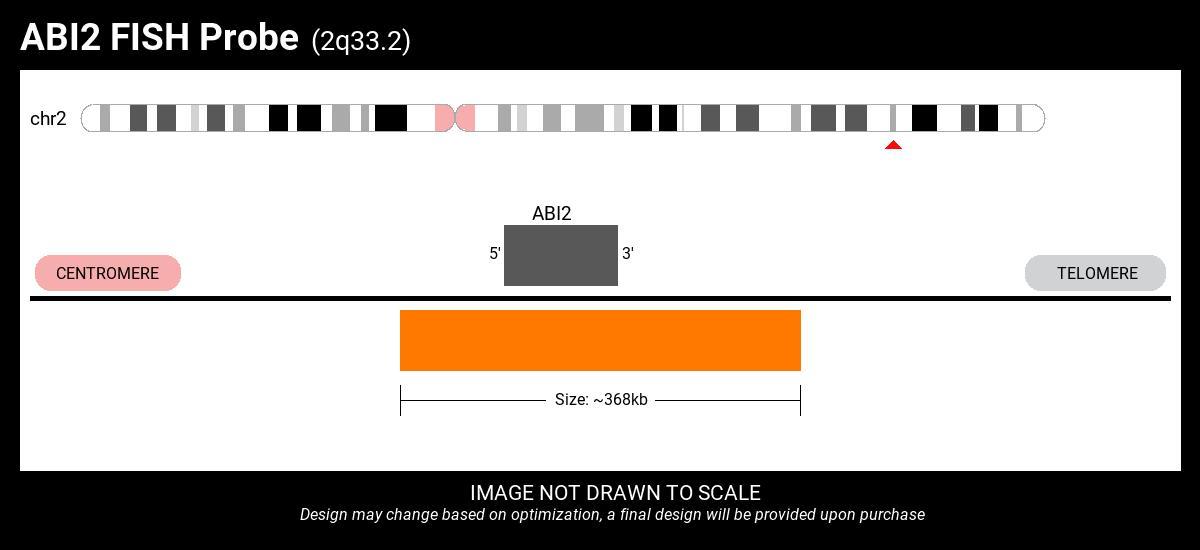 ABI2-CHMP1A Fusion FISH Probe