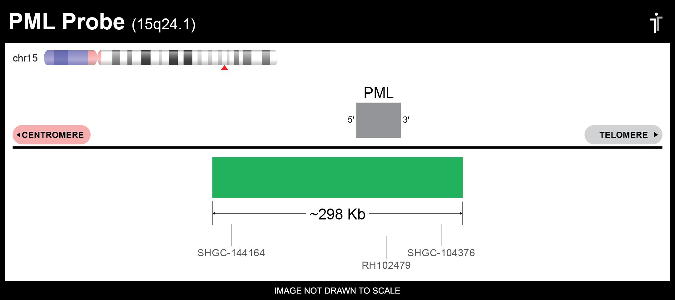 PML FISH Probe Ideogram